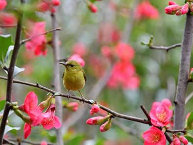 春暖花开 南山公园鸟语花香