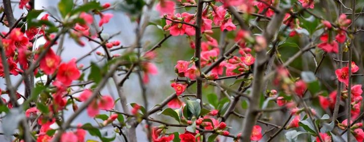 春暖花开 南山天天时时彩鸟语花香