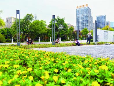 8月9日,南滨公园,园林工人正在栽种应季花卉。