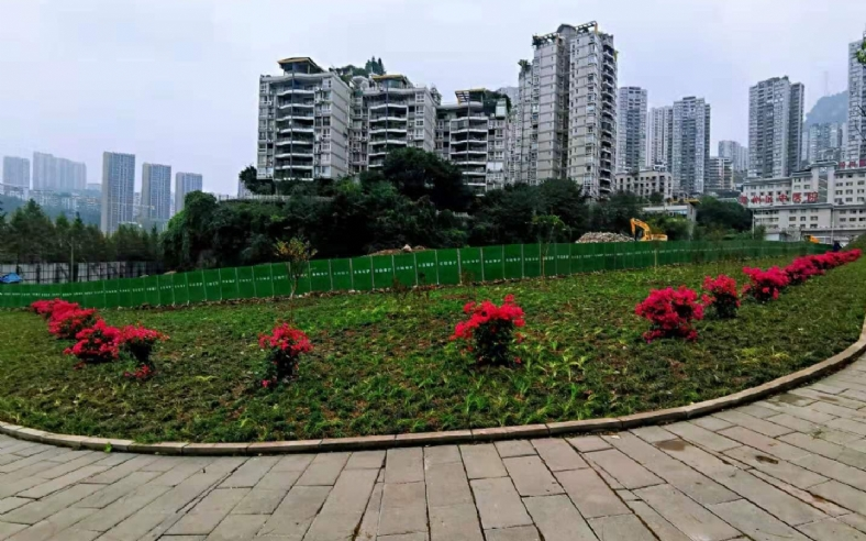 万州区牌楼长江大桥北桥头人行道上,栽上了红色三角梅,红艳艳的~惹人爱。